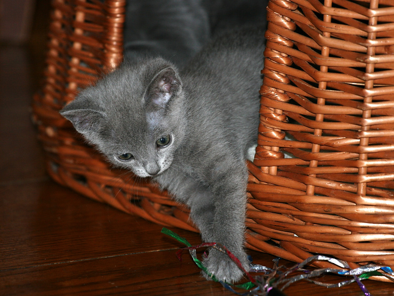 Picking Russian Blue Names